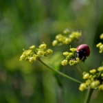 Příroda 2012 - foto